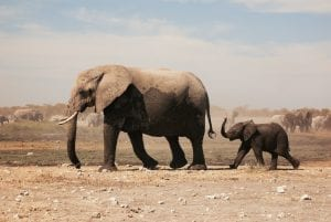 interesing facts about elephants