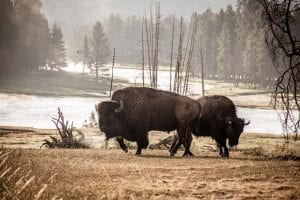 Interesting Facts about the Yellowstone National Park