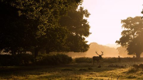 interesting facts about surrey