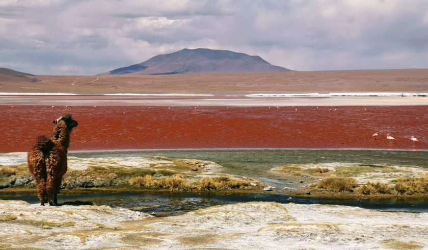 interesting facts about Bolivia