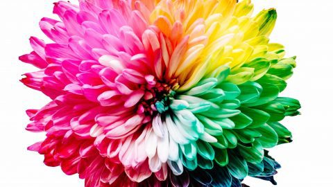 interesting facts about color