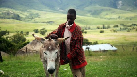 intersting facts about Lesotho