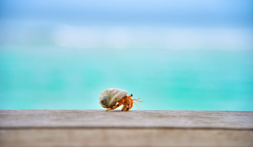 facts about Hermit Crabs