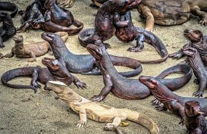 facts about komodo dragons