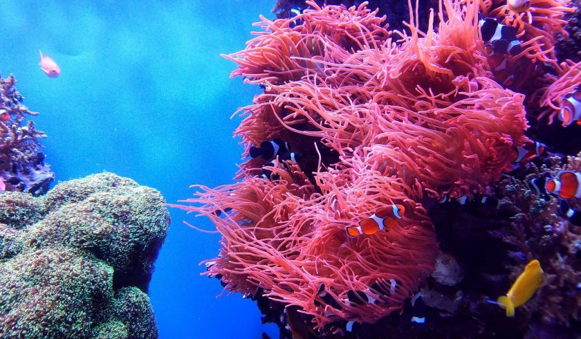 interesting facts about Coral Reefs