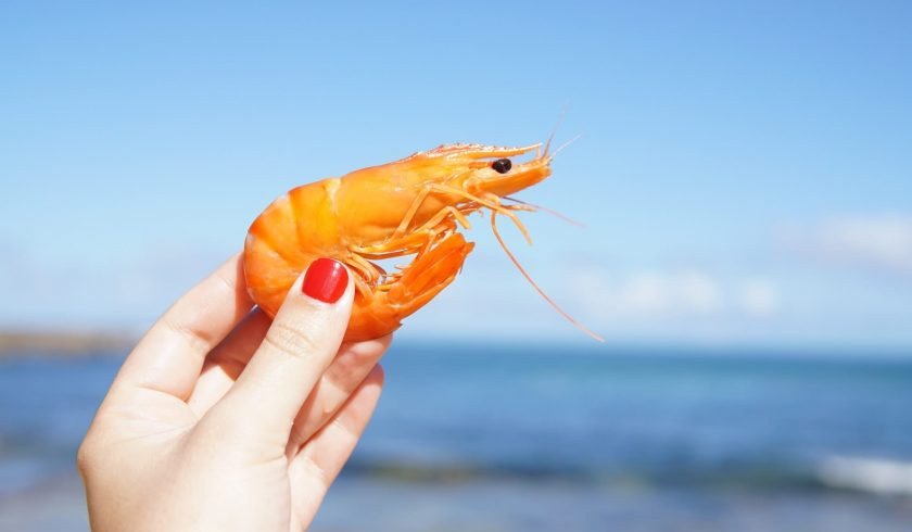 nutrition facts about Shrimp