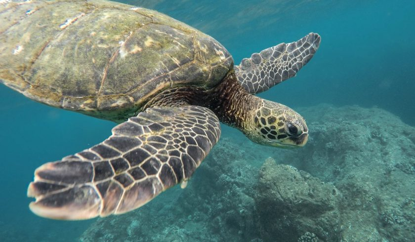 fun facts about sea turtles