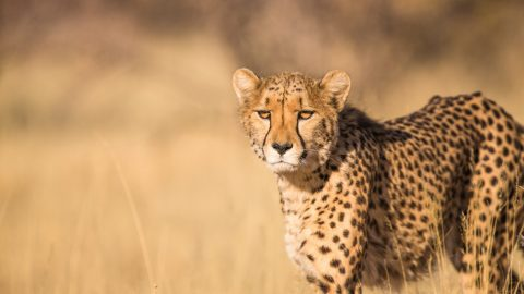 interesting facts about African animals