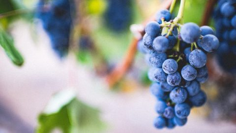 nutrition facts for grapes