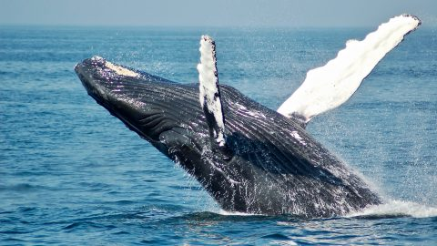 fun facts about whales
