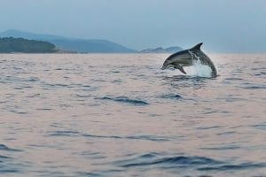 Facts about the Adriatic Sea