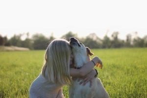 fun facts about labradors