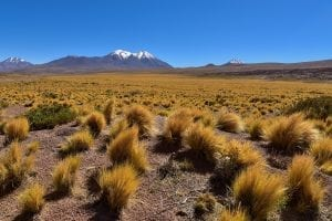 Fun Facts about the Andes