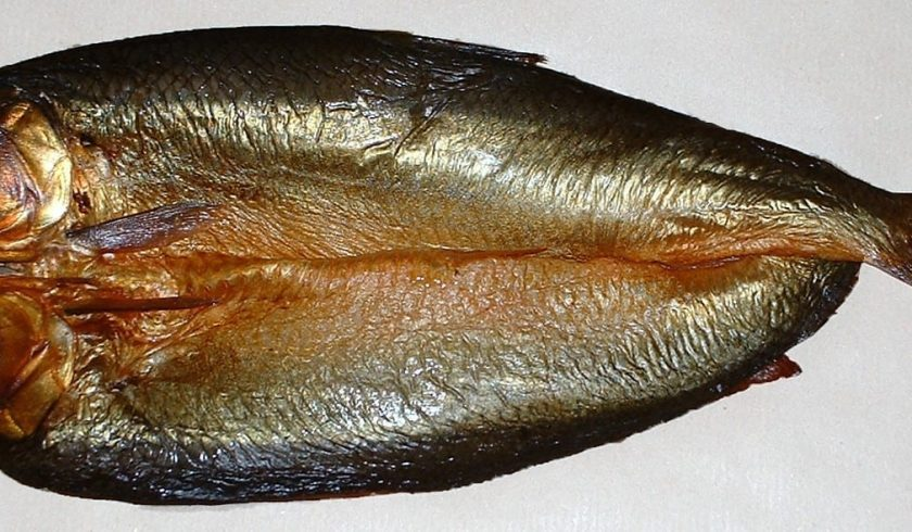 facts about herrings