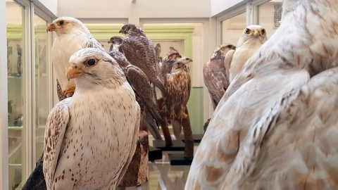 facts about taxidermy